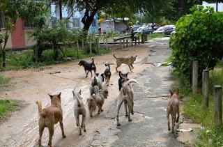 Vereador cobra ação do executivo Municipal para controle da reprodução de cães e gatos soltos em vias públicas da Cidade de Paulista