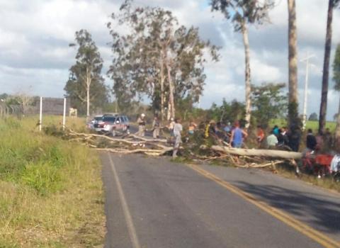 Motociclista morre após ser atingido por árvore na PB