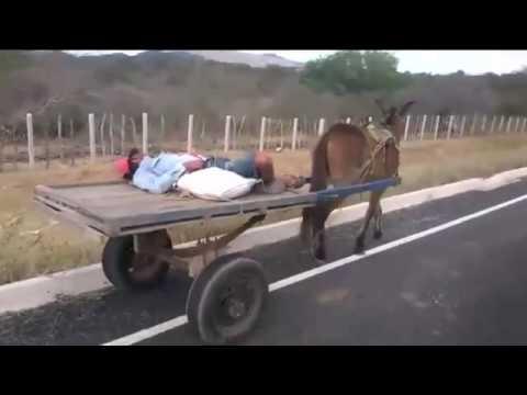 Homem dorme em carroça de burro e animal segue viagem na Paraíba